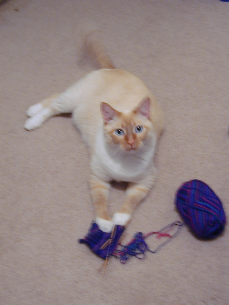 O_with_first_sock_ever_1